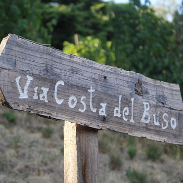 Costa del buso cru vineyard